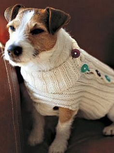 Knit a Button-Up Dog Sweater