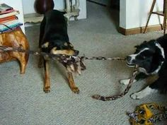 Your canine friend will enjoying tugging with a tammys-tugs.com too!