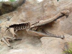 Sarcosuchus Imperator Fossil
