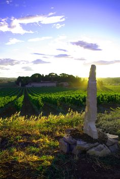 Domaine Saint Hilaire seen from the ridge, with sculpture by Lilau in the foreground. Guests who visit for a wine tasting can do the sculpture walk between us and our neighbours Croix Gratiot and Savary de Beauregard.