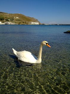Neimporio beach, Andros