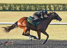 Going into the third session of the Ocala Breeders' Sales Company's April Sale of 2-Year-Olds-in-Training Sale, the auction had produced a total of two million-dollar sales in its entire history. That number was doubled …