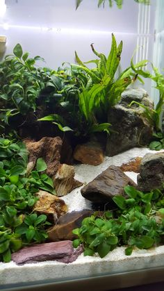 I love this planted set up with the use of rock and sand.
