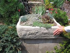 A pot with carving in wet cement Portland Cement, Outdoor Projects, Wild Flowers, Concrete, Planter Pots, Carving, Michigan, Crafts, Rocks