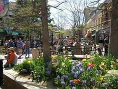 pearl street mall boulder colorado | Other Things To Do In Boulder