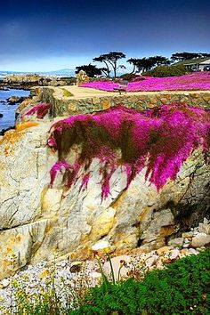 Lover's Point, Pacific Grove, California  In loving memory of Alice and Addison Harris