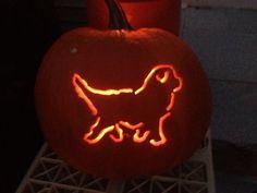 Happy Halloween Newf