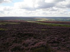 The North Yorkshire Moors, my favourite place to be <3