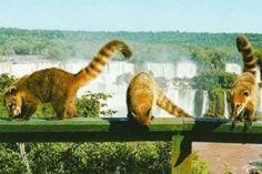 Tchela - Atrações em Foz do Iguaçu - Usina de Itaipu - Google Imagens http://marcelatchela.com.br/index.php/2017/04/08/foz-iguacu-um-espetaculo-da-natureza-e-um-paraiso-para-compras-parte-2-atracoes-em-foz-iguacu/
