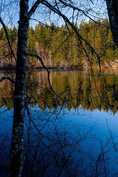 Fisher Pond - Vashon Island