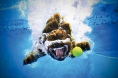 Underwater Dogs // Seth Casteel