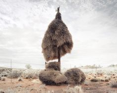This series by African photographer Dillon Marsh, titled Assimilation, captures the nests of sociable weaver birds built around telephone poles in the barren landscapes of the Kalahari Desert.