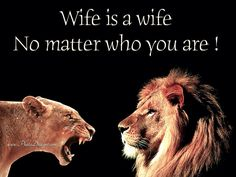 New Quotes, True Quotes, Inspirational Quotes, Lioness Quotes, Black Love Quotes, Buddha Quotes Life, Big Cat Family, Lion And Lioness, Lion Love