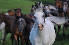 Gosia Mąkosa-equine photography