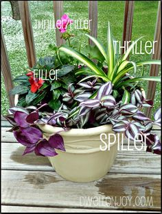 Its as simple as three plants. One that grows vertically for the wow factor. One that spills dramatically over the side of your pot. And one or two filler plants {depending on the size of your container} to liven up the empty space. The perfect container garden equation. Be sure to use both foliage and flowers. Try contrasting colors and textures to get the most dramatic look!