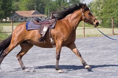 Riders appear to affect horses' mental stress more than their physical stress during exercise.