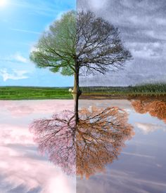 One photograph four seasons   Size; 1300 x 1390 Source; www.dreamstime.com