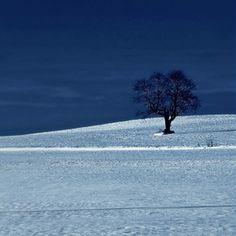 lonley tree on snow
