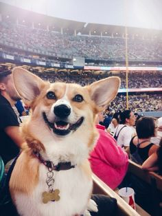 Take me out to the ball game!!!! YEAH!! Corgi style!
