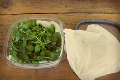 aartipaarti» Blog Archive » How to Store Cilantro