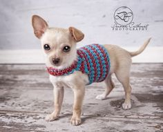 Super easy crochet Chihuahua sweater - link to free pattern by Anna Ware
