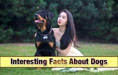 Interesting Facts About Dogs https://didyouknowpets.com/2016/04/13/interesting-facts-about-dogs/