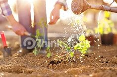 Search for Stock Photos of Water On A Farm on Thinkstock