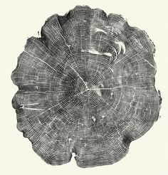 Woodcut: A Meditation on Time Through the Inked Cross-Sections of Fallen Trees | Brain Pickings