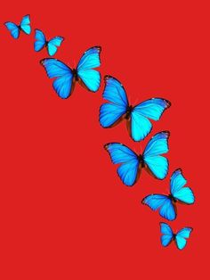 Butterfly Effect, Plants, Animals, Animales, Animaux, Plant, Animal, Animais, Planting