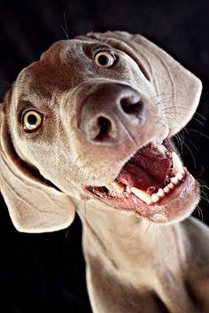 Happy dog on a photo shoot.