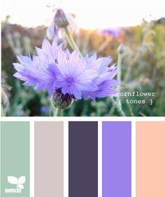 cornflower tones