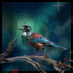 Tui Tane -med by Julian Hindson - prints Tui Bird, Archetypes, Painting Techniques, Art Forms, Art Direction, New Zealand, Cool Art, Scenery, Digital Art