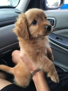 This cutie braving her very first car ride. | 29 Absolutely Vital Pictures Of Puppies