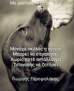 Greek Quotes, Dog Lovers, Animals, Animales, Animaux, Animais, Animal