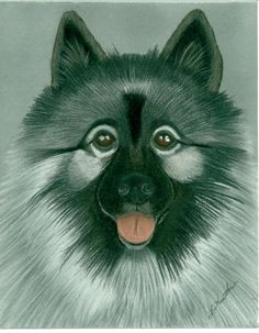 Keeshond ArtistLinda Henthorn MediumPainting - Pastel On PaperDescriptionThis is an original pastel painting / drawing. The size is 8 x 10 inches. The portrait was done in high quality pastel, signed by the artist and sprayed with a fixative on pastel paper mounted on a heavy cardstock.