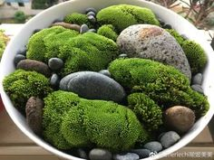pea gravel, activated charcoal, wet dry Moss layers, soil. Lay down rocks that will appear from under moss in container. mix 50/50 soil and peat Moss, could all clay in a bowl(see kokedama tutorials) and add just enough water to mixture so can form ball but not soaking. Cover ball with live Moss and place in terrarium. Repeat while placing stones throughout