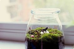 Decor Crush – Home Decor Ideas – Terrariums | Free People Blog