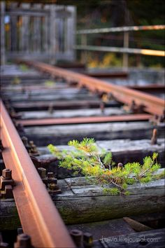 beautiful railroad tracks in Germany . Blur Image Background, Desktop Background Pictures, Blur Background Photography, Studio Background Images, Light Background Images, Landscape Background, Picsart Background, Photo Backgrounds, Editing Background