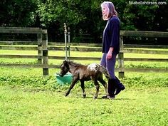 Falabella Horses. The smallest horse bred in the world (32in/78cm in height on average)