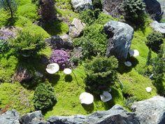 Mushrooms in the rock garden | Flickr - Photo Sharing!