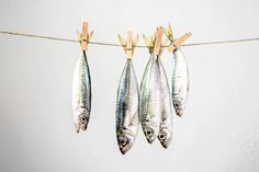 Fishy still life Still Life Photography, Art Photography, Fish Drawings, Fish Art, Food Illustrations, This Or That Questions, Inspiration, Things To Sell, Online Marketing