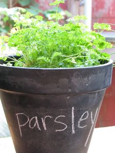 Put chalkboard paint on terracotta flower pots and you get black board pots- very cool