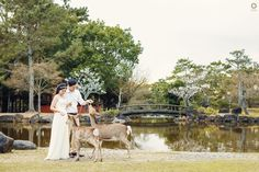 If they breathe, they live If they live, they feel If they feel, they love If they love, they are aware If they are aware, they have a soul Love is not only about human, its about all creatures . . Courtsey from Kezia and Yusin Prewedding Location Nara, Kyoto JAPAN . . Photograph by @alvinfauzie  Check our website for the other photos at www.alvinphotography.co.id  #japanprewedding #japanweddingphotographer #nara #naraprewedding #preweddingnara #preweddingkyoto #kyotoprewedding…
