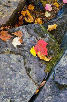 Oxtongue River scene Algonquin Park, Highlands, Scene, Autumn, River, Beautiful, Fall, Scottish Highlands, Rivers
