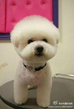 I just got my haircut.