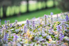Ayube con floración morada en un jardín lleno de texturas y acentos de color. Acacia, Plants, Color, Landscaping, Flowers, Landscape, Projects, Colour, Flora