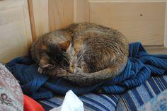 Mizuki - my oldest Cat