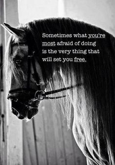 Just do it....I think this every time I go over a jump after not doing it for a while. #crazyhorseperson #ilovehorses #cowgirlup