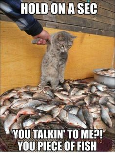 """""""You talkin' to me?! You piece of fish"""""""
