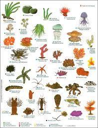 Resultado de imagem para lista de animais marinhos